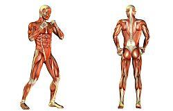 Anatomie Basisbild mini