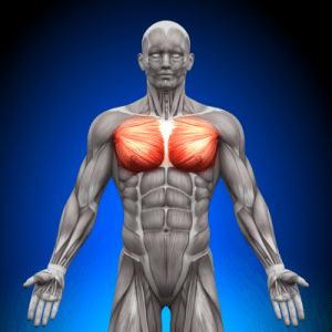 bigstock-Chest--Pectoralis-Major--Pec-47707642
