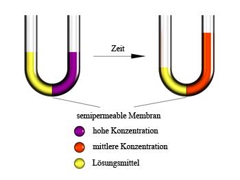 Osmose2