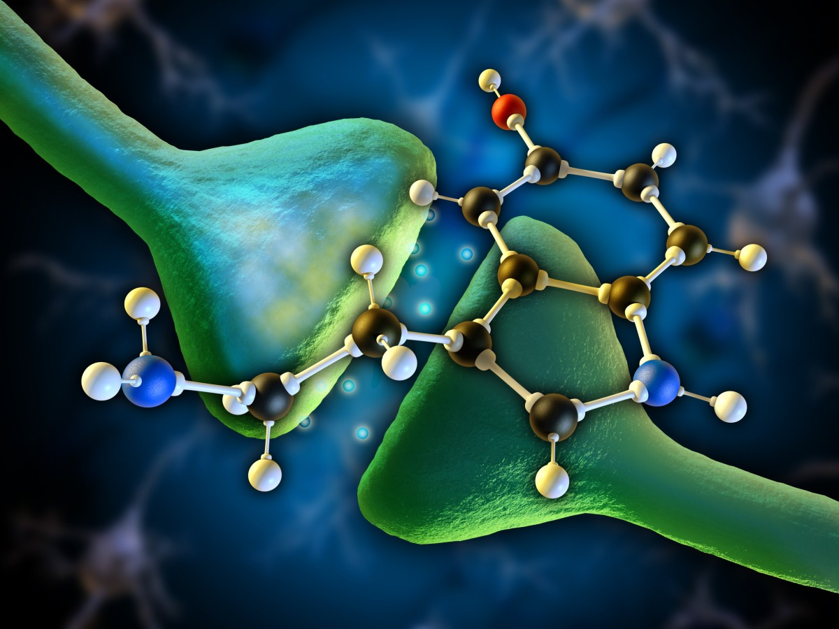 Serotonin molecule as a neurotransmitter in the human brain. Dig