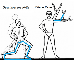 Abbildung: Seyfarth, A. (2005). Einführung in die Biomechanik. Teil C: Dynamik der Rotation.