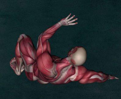 Anatomie liegend